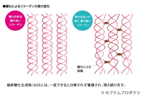 酸化によるコラーゲンの質の変化